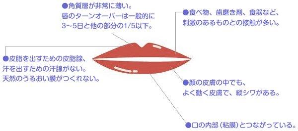 唇のターンオーバー