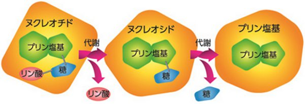 プリン体3種類の構造