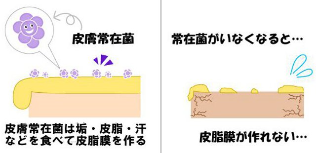 皮膚常在菌