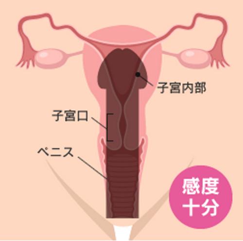 ペニスと膣の相性