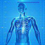 骨ホルモンは究極の若返り物質!骨芽細胞を刺激する2つの運動法とは
