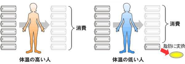 体温と代謝の関係